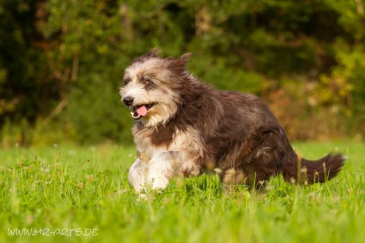 Old girl by Fiorildi