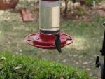 hummingbird at feeder by Micky1966
