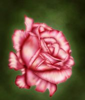 My rose by LucieG
