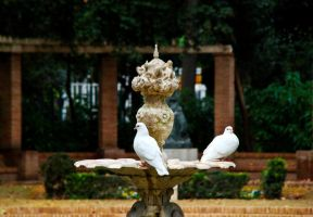Doves by westface2
