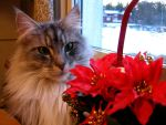 Christmas cat by Shyi