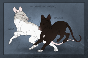 Adoptable Madra - Nosa and Moeggel by Mikaley