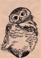 Owl by starpersona