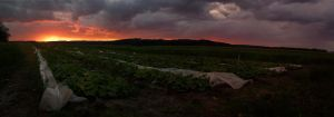 Cucumbers and sunset... by Yevaud-aep-Dessen