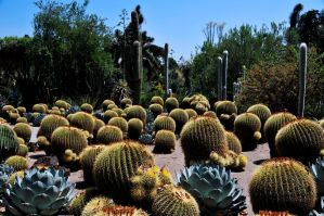 Cactus Convention by AndySerrano