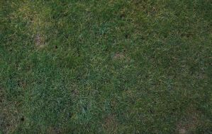Grass Texture 1 by shhhhh-art-Stock