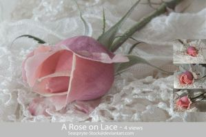 SeaSpryte-Stock - A Rose on Lace by SeaSpryte-stock