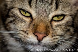 The cat is upset by Caramanos2000