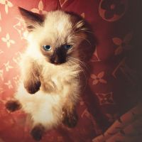 purr 2 by mohdfikree