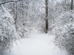 Forest Path in Winter 7 by Martut