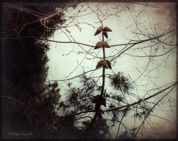 Pine cones by Spiritor-Witch