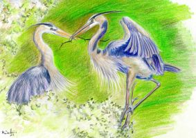 herons by imcy