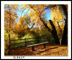 The Bench by KLR620