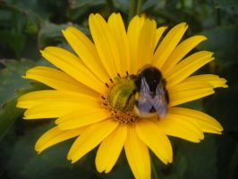 another bumble-bee by Lucy-Redgrave