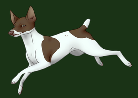 Rat terrier by stormith