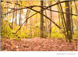 4_Autumn is... by Fimrah