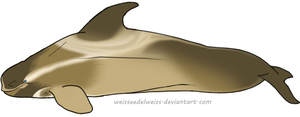 Wraith Whale Adoption: AnoOrca by WeisseEdelweiss