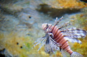 Lionfish by Newt471