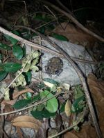 Toad 2Nov2014 by RiverKpocc