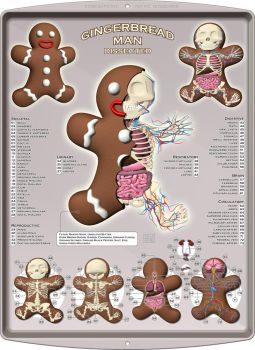 Gingerbread Man Dissected by freeny