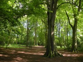 Haarlemmer Hout by remmy77