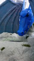 Blue Dragon Head_#2 by YDdraigGogh