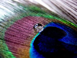 Peacock feather and droplet by Pamba