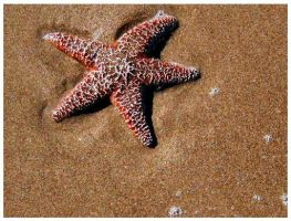 Starfish by SLJones-photo