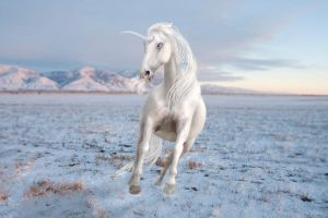 Mystic of the tundra not stock by Chunga-Stock