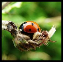ladybird and ant by vollyy