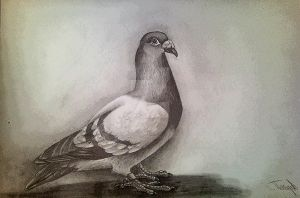 pigeon. by Spring-Fairy