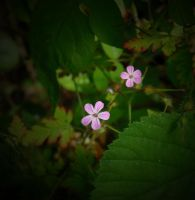 TWO PINK by ANDYBURGESS