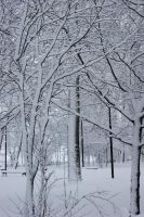 winter Forest 6 by Woolpix