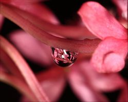 Refraction In A Raindrop. by Firey-Sunset