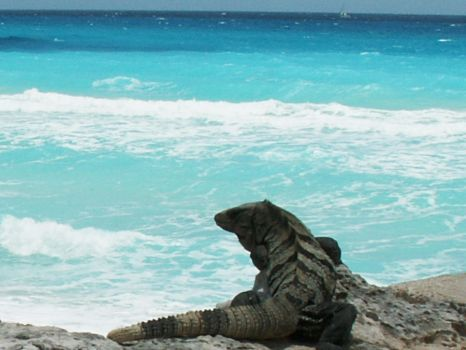 Iguana by the sea by BloodiedGypsy