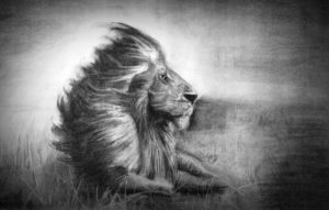 Lion by mcollins2012