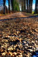 Strada solitaria by Brompled