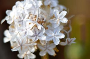 Tiny White Flowers by A-Sped-Kid