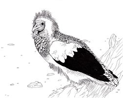 Egyptian Vulture by Forbidding