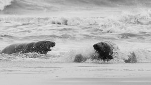 Donna Nook I by fraughtuk