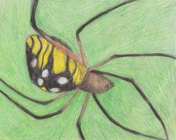 Black and Yellow Argiope by LinmirianJoyrex
