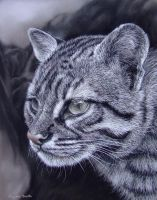 Geoffreys Cat, pastel charcoal by AngelaMaySmith
