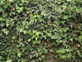 wall of ivy by LadyxBoleyn