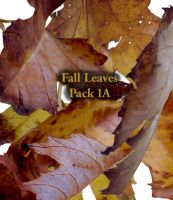 Fall Leaves pack1 by Treeclimber-Stock
