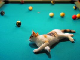 Kitty's playing billard by MmeLeo