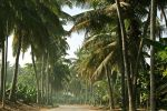 Coconut Road by simmo0916