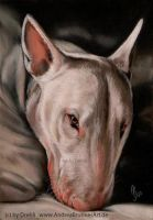 bull terrier by Drehli