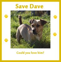 Save Dave by MessiMutt