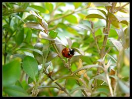 Ladybug where have you been by thr33face