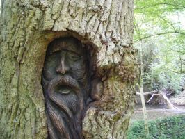 THE GREENMAN WOOD CARVING IN AN ACTUAL TREE by Vee-Deviant